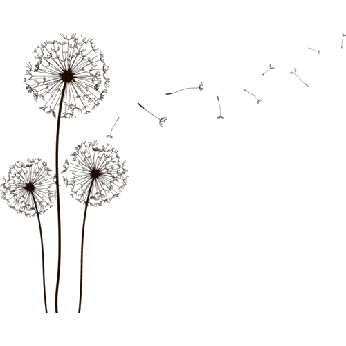 Dandelions tumblr bobi blog pinterest for How to draw a dandelion step by step
