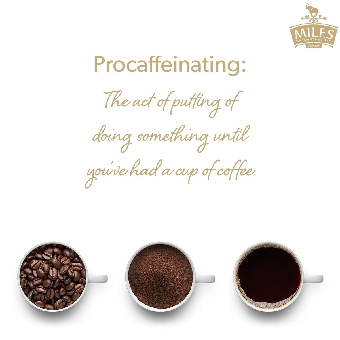 Procaffeinating Coffee Quotes Funny Quotes Coffee Tea