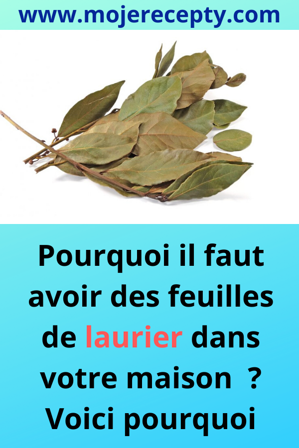 Pourquoi il faut avoir des feuilles de laurier dan
