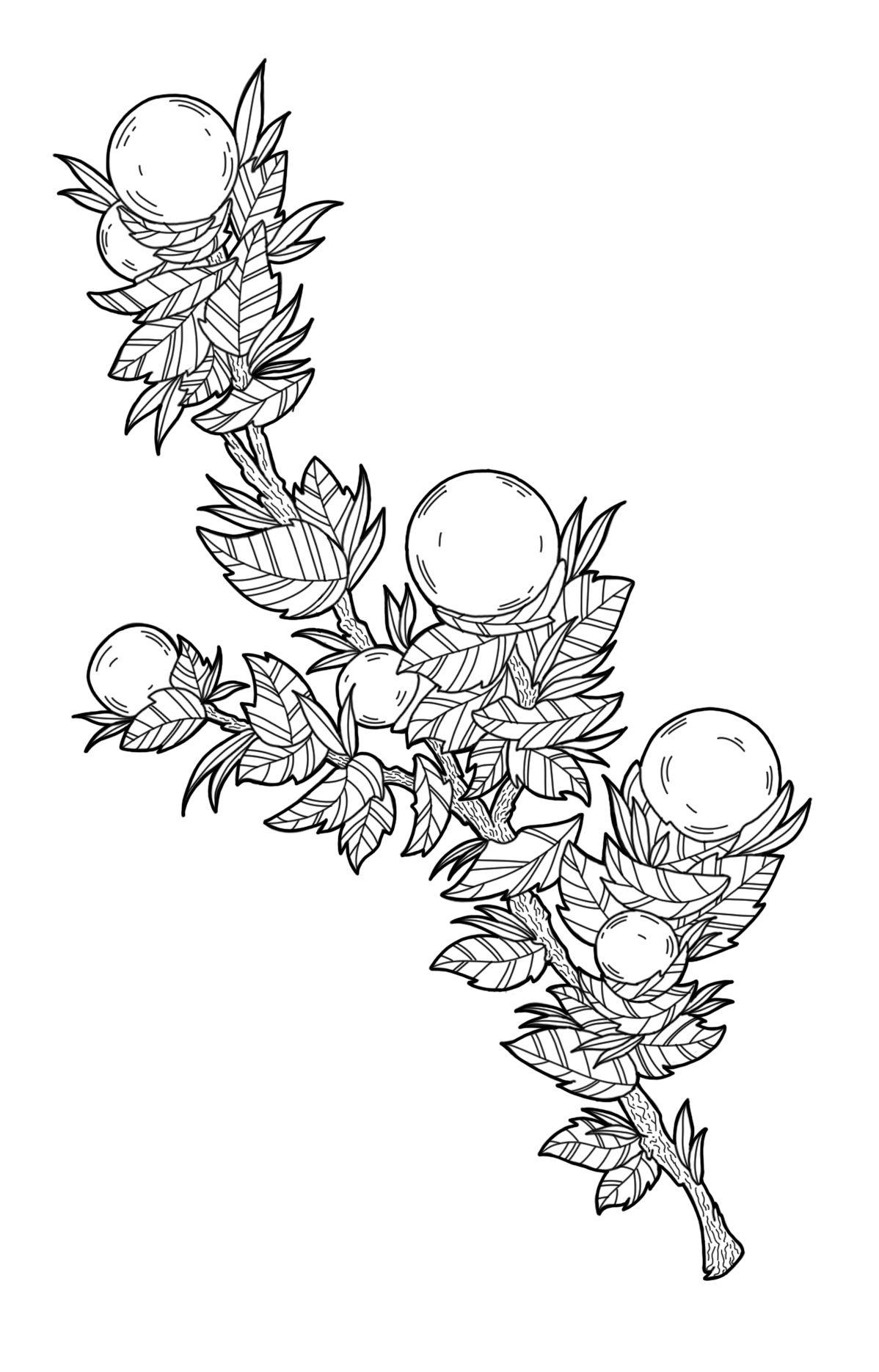 Черно белый эскиз тату с цветами: Эскиз цветов Эскиз растений Эскиз ветки Тату эскиз цветов