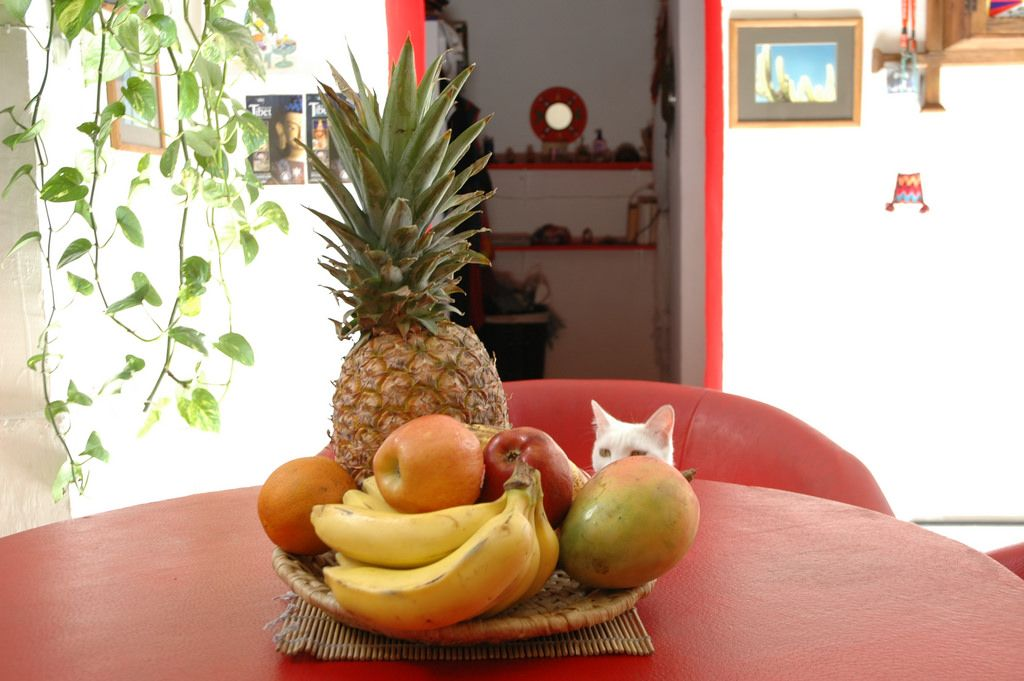 https://flic.kr/p/6fz1D3 | Bowl of mostly fruit with some cat, Rossy's and Ariel's house, Zona Centro, Guadalajara, Jalisco, Mexico