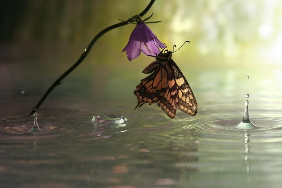 Image result for butterfly on flower in rains