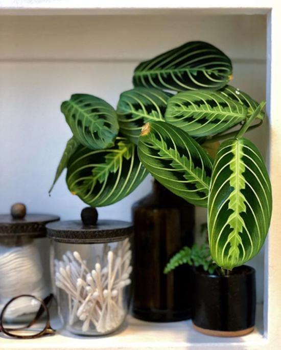 Pflanzen fürs Bad verwandeln es in eine grüne Oase - Fresh Ideen für das Interieur, Dekoration und Landschaft
