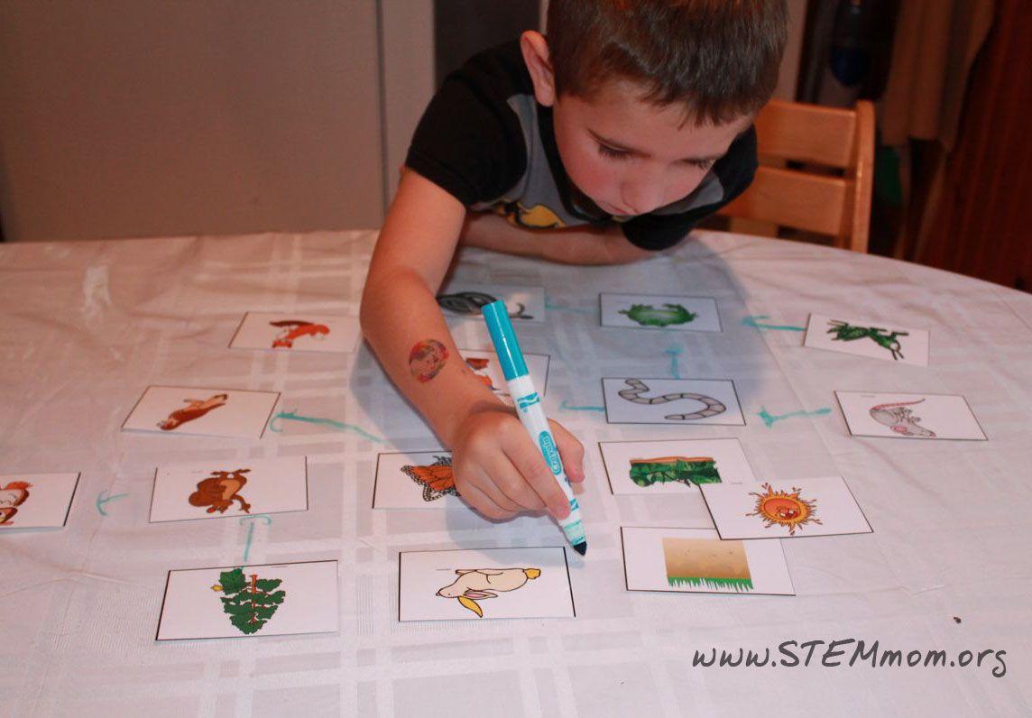 Boy Drawing Food Web Using Free Printable Food Chain