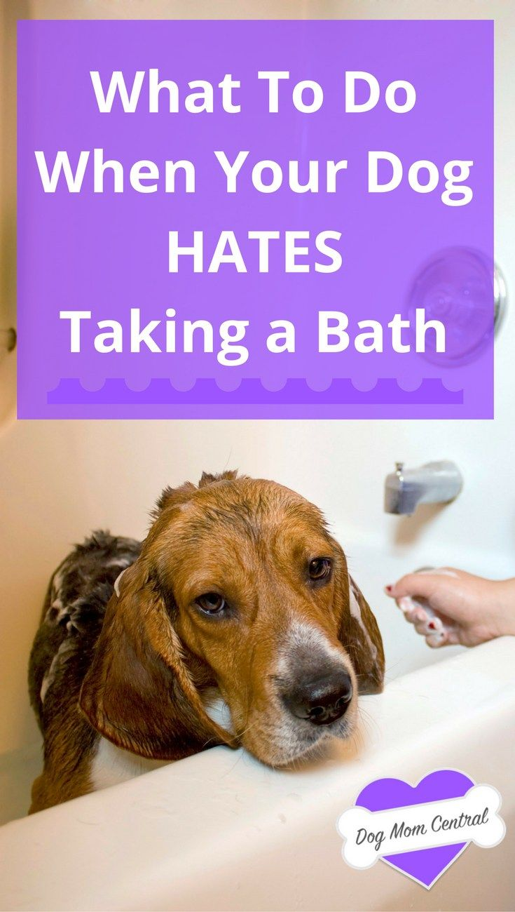 What To Do When Your Dog Hates Taking A Bath Dog Hacks Dog
