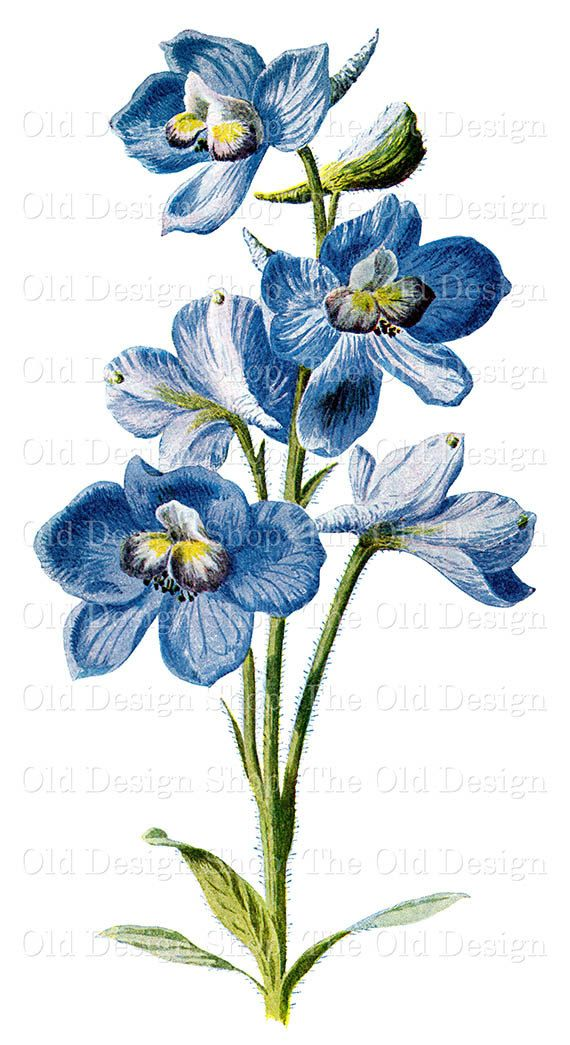Larkspur | tattoo | Pinterest | Drawings, Flower and Flower drawings