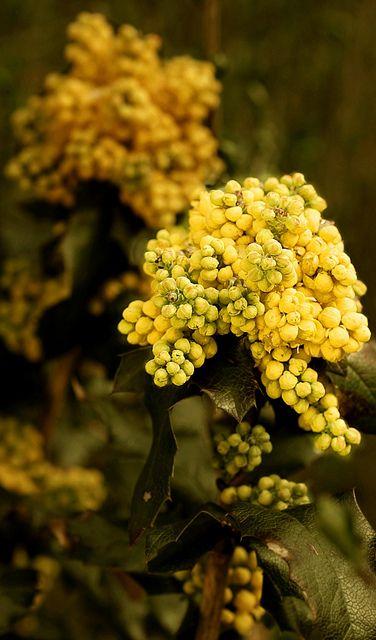 Harvest grapes / Fall.
