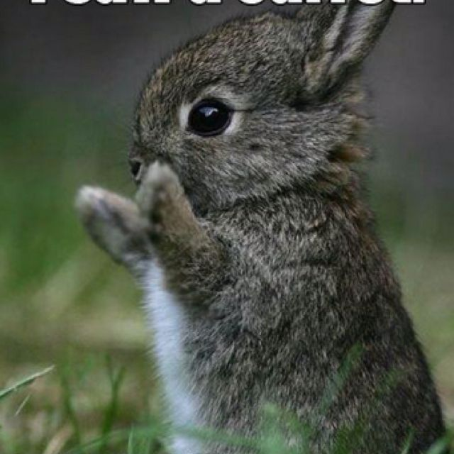 Awe this bunny so cute and really