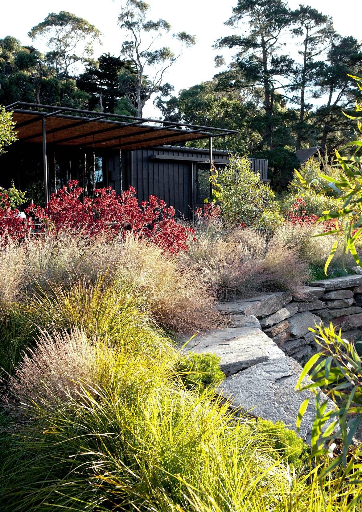 11 native Australian garden design ideas to inspire ...