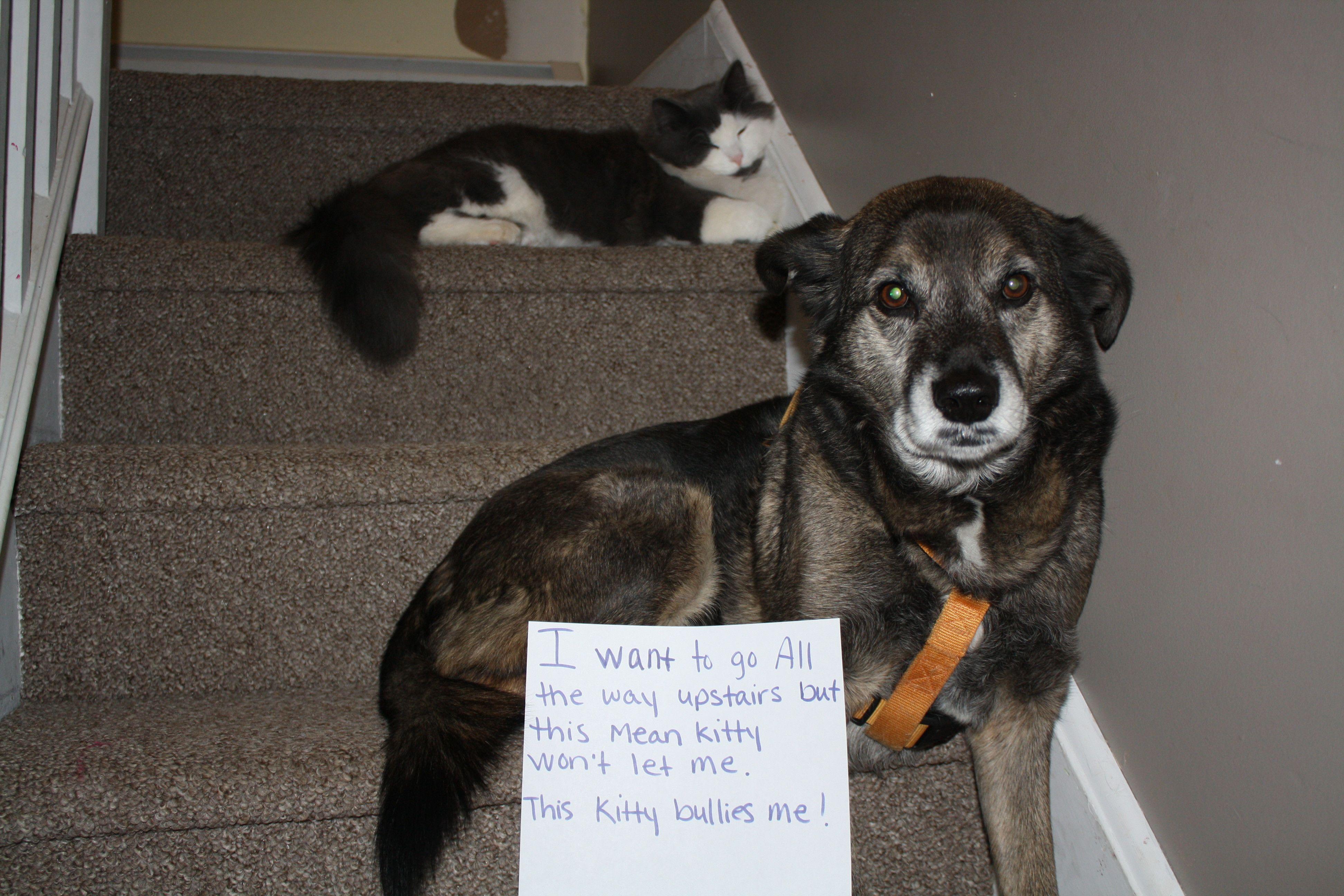 I Let This Kitty Bully Me Funny Dog Signs Animal Shaming Dog Shaming