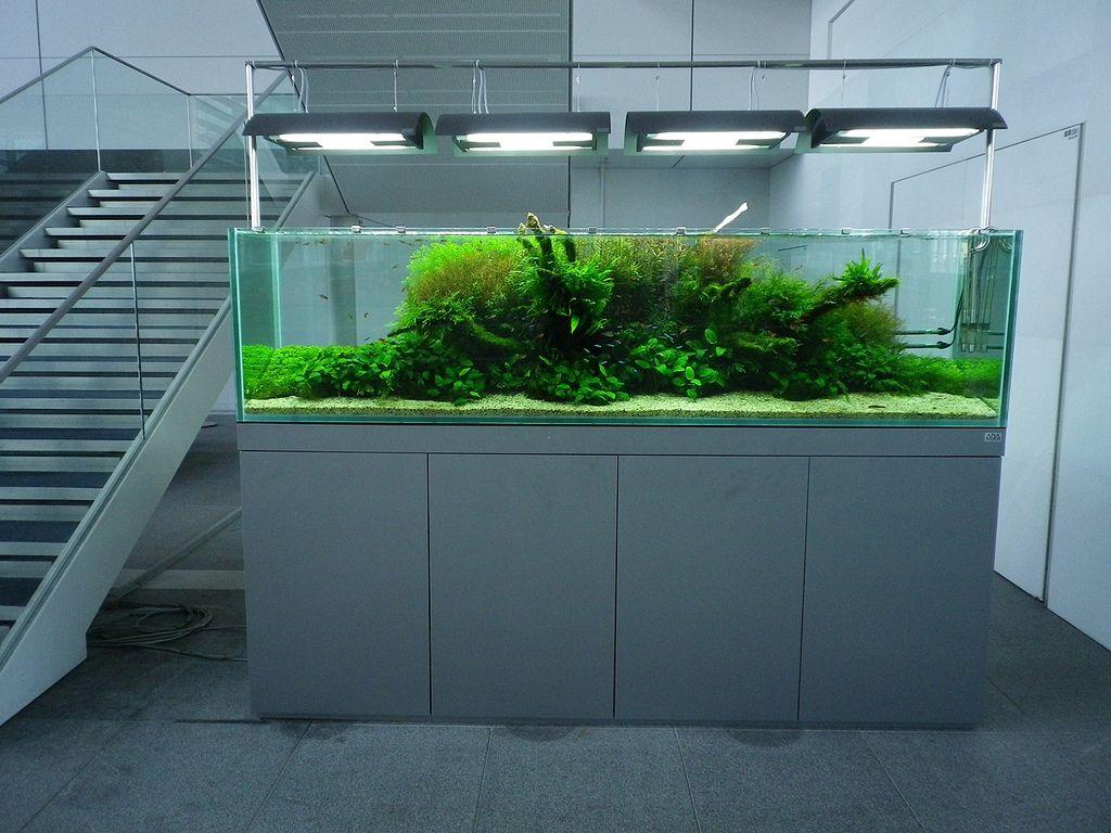 ADA Nature Aquarium | Aquascape aquarium, Nature aquarium ...