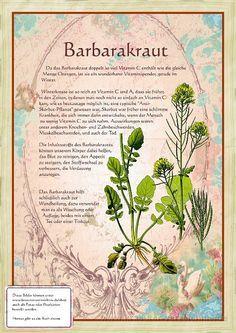 Bilder aus dem Buch Alte Heilkräuter-Zeichnungen #kleinekräutergärten
