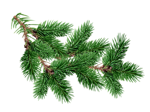Sgovy Png Picture Tree Christmas Leaves Fir Tree