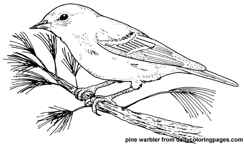Http Dailycoloringpages Com Images Texas Pine Warbler Bird Coloring Pages Png Bird Coloring Pages Coloring Pages Cute Coloring Pages
