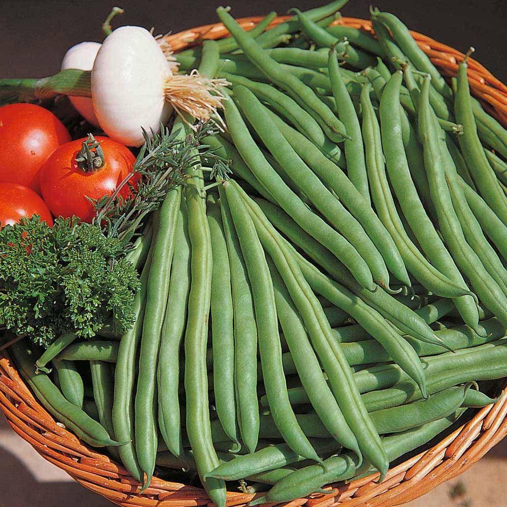 Dwarf Bean Speedy All Vegetable Plants Thompson 400 x 300