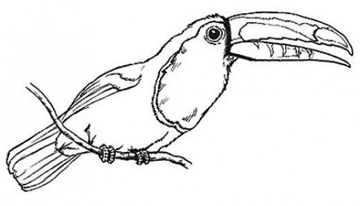 Free Online Pictures Of Birds To Color For Adults And Kids Jungle Coloring Pages Bird Coloring Pages Coloring Pictures