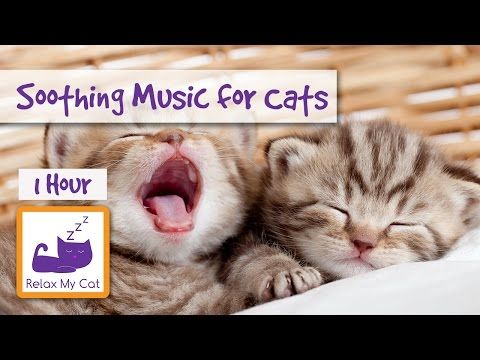 1 Hour Of Music For Cats Soothe Your Cat With Relaxing Music
