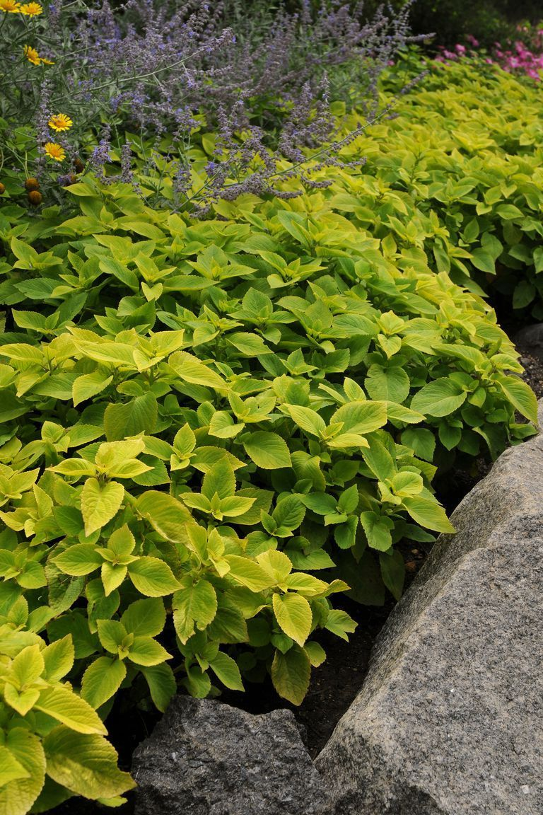 Plants That Will Thrive in the Shade For the yard Pinterest