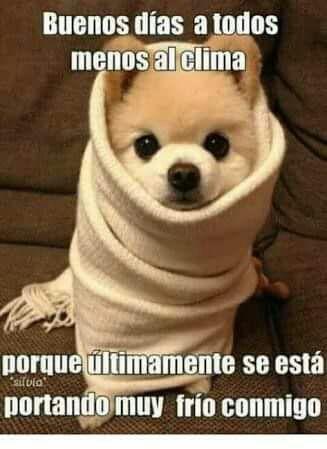 Pin De Wendy Tello En Imagenes Animales Bonitos Animales Bebes Buenos Dias Perros