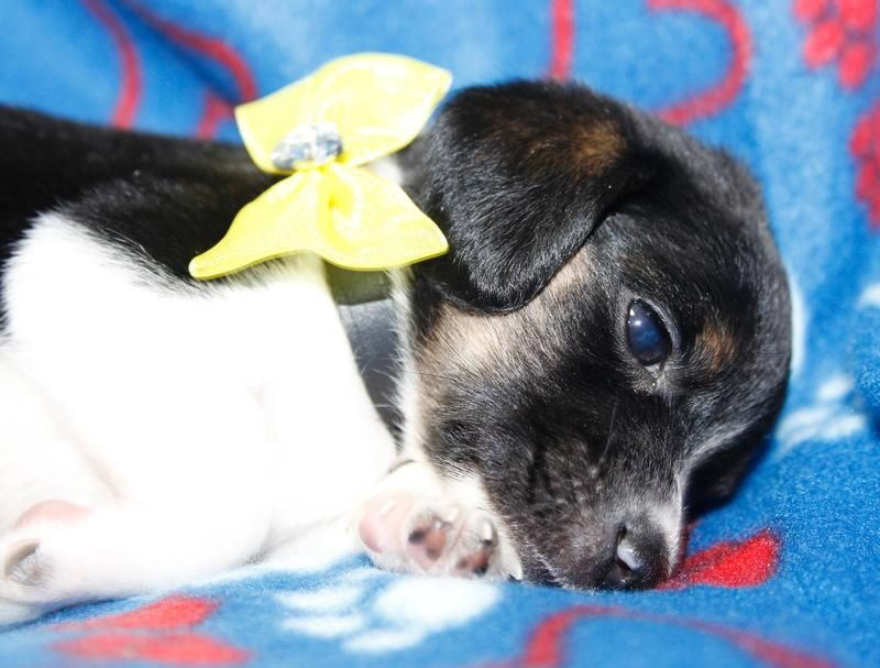 Adopt Flounder On Dogs Humane Society Puppy Love