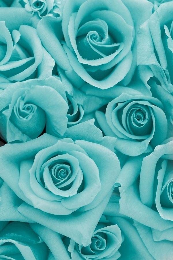 Aqua blue roses