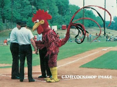 Image result for gamecocks the rooster mascot