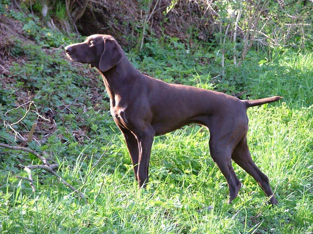 Pin En Dog That I Like