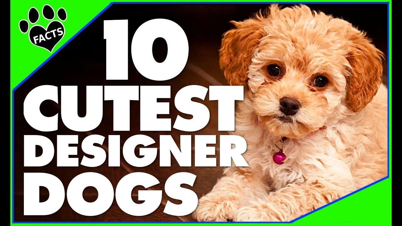 Designer Dogs 101 Today S Most Adorable Designer Dog Breeds