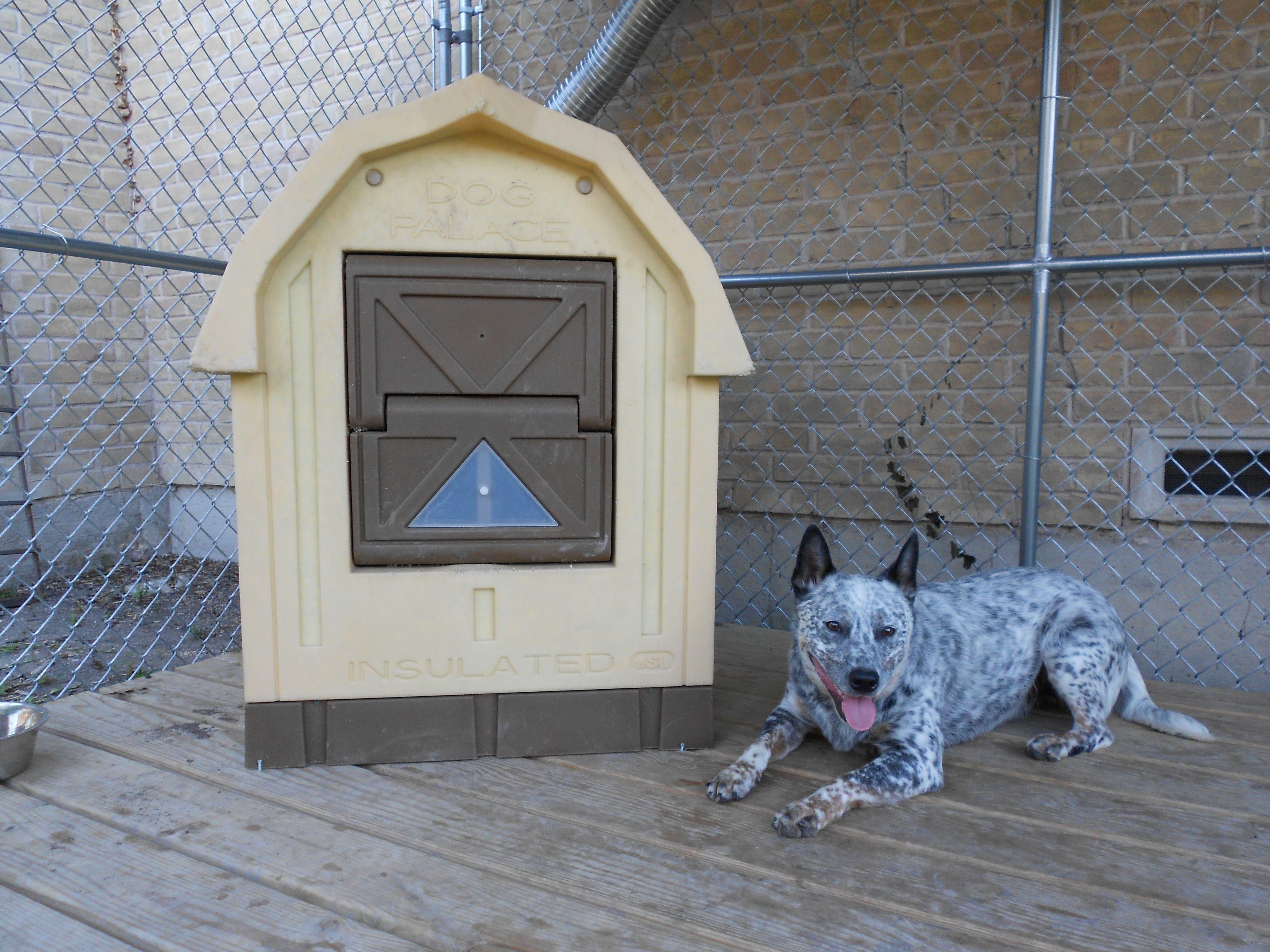 Buddy and his AC\'d (and heated) dog house. Kennel below a window ...