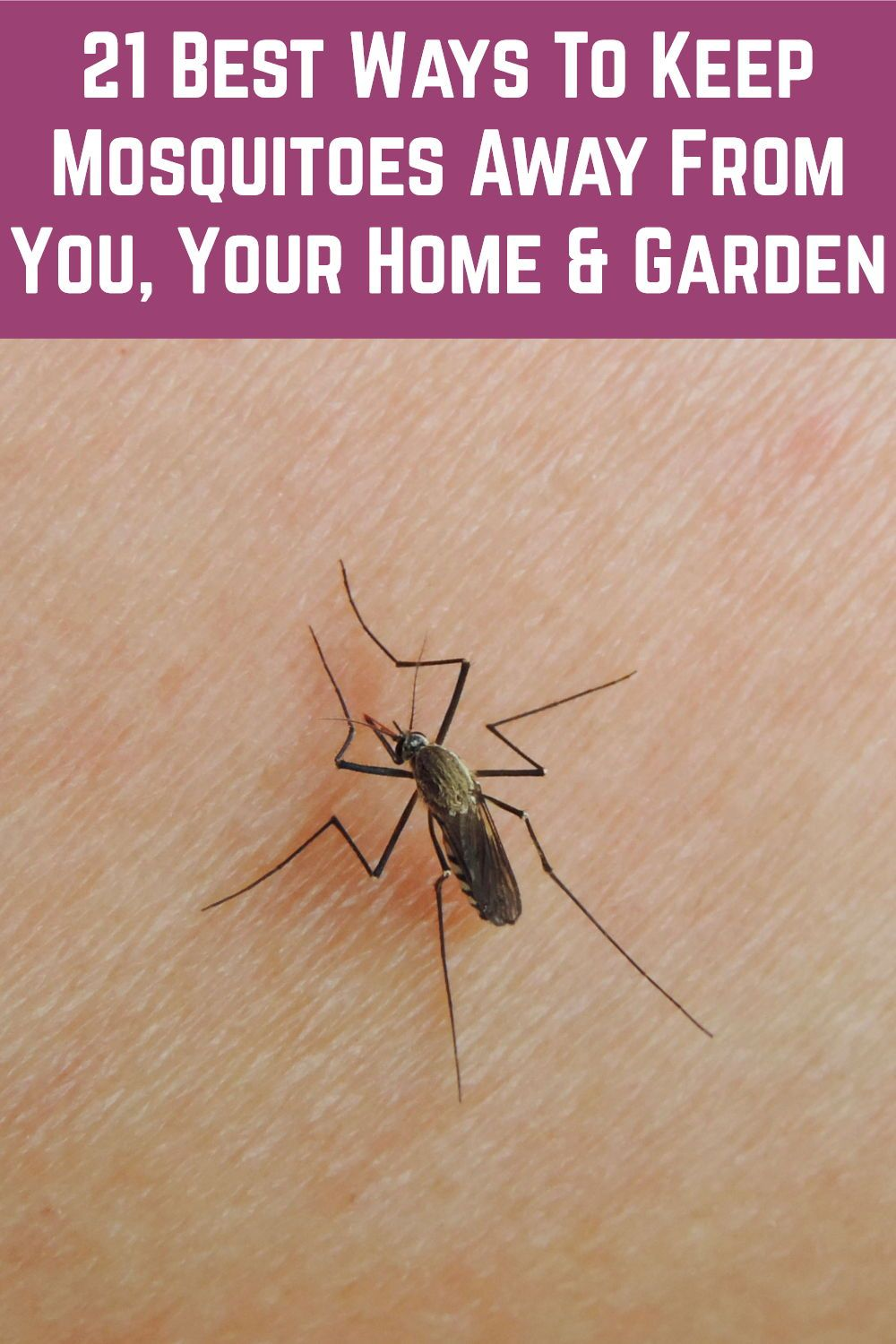 21 Best Ways To Keep Mosquitoes Away From You Your Home Garden Natural Mosquito Repellant Mosquito Bug Spray Recipe