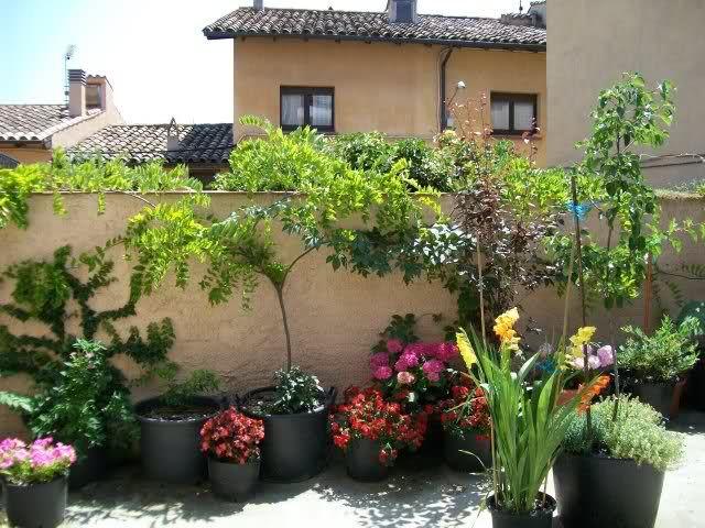 Plantas Para Terraza Con Mucho Sol. Cool Plantas Para Terraza Con ...