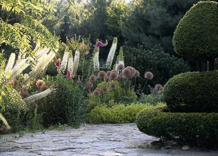 Alexandre Thomas garden ideas Pinterest Tipos de plantas