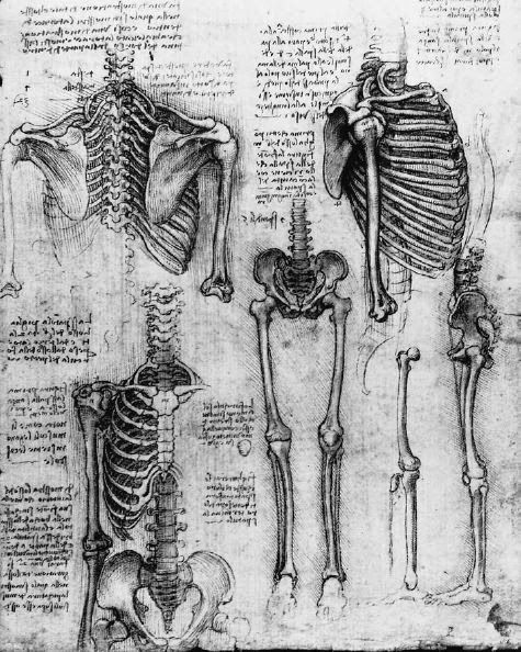 Pin von Hester Coucke auf Human body | Pinterest