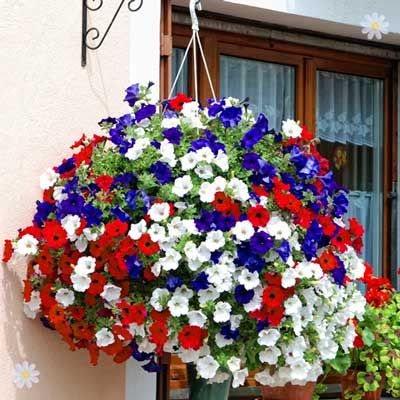 Amazon Co Uk Orchids All Departments Hanging Flowers Hanging Flower Baskets Petunia Flower