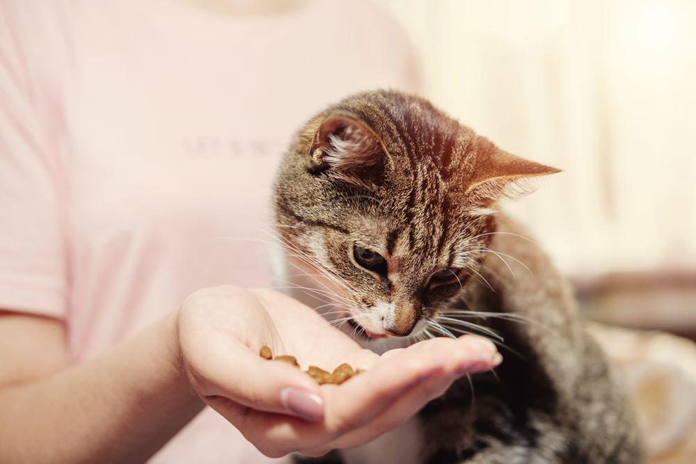 Woman Feeding Cat Eats Hands Girl Cat Feeding Cats Ciri