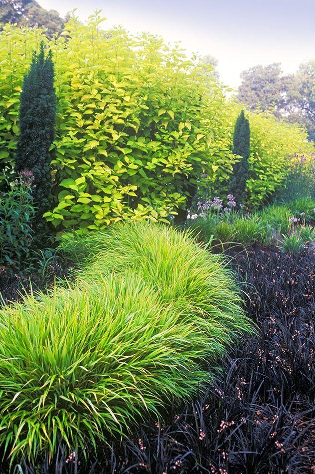 this design by Adrian Bloom uses one shrub, Cornus alba Aurea, one - garten blumen gestaltung