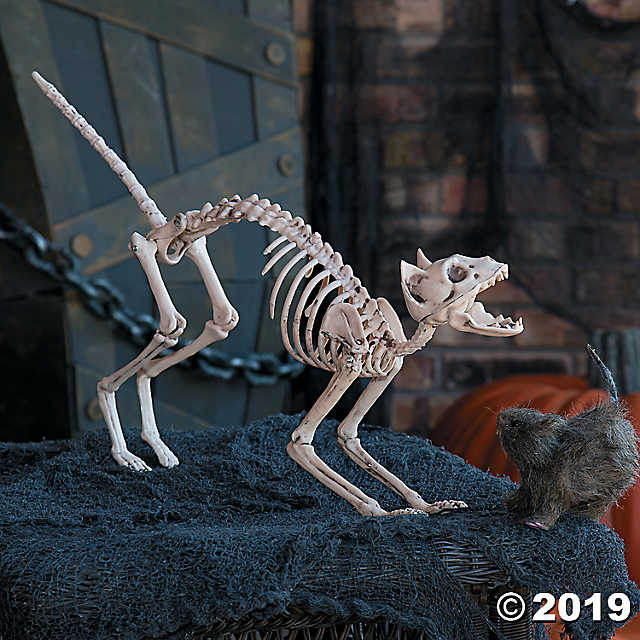 Make No Bones About It This Cat Is A Creepy Cool Decoration Add It To Your Halloween Decorations This Season And Spook Your Frien Halloween Skeletons Halloween Skeleton Decorations Animal Skeletons