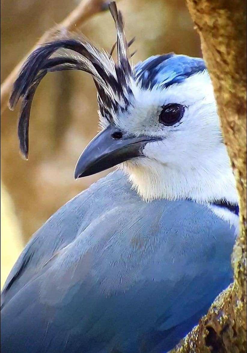 Pin By Martina San Juan On Fly Free Animal Lover Animals Bird