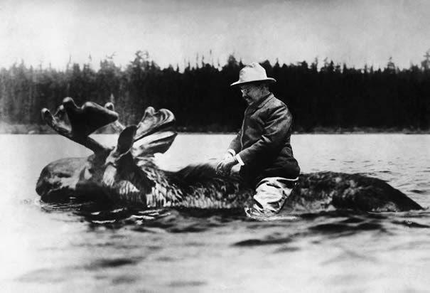 President Teddy Roosevelt riding a moose