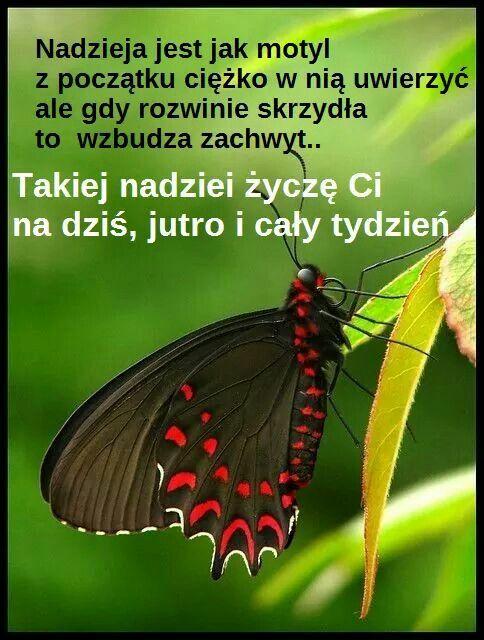 Pin By Katarzyna Jarocka On Poniedzialek Motivational Words Inspirational Quotes Isaiah 28