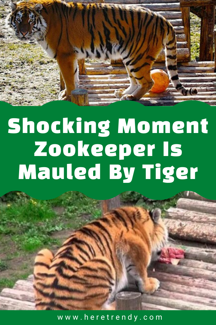 Mauled By Tiger