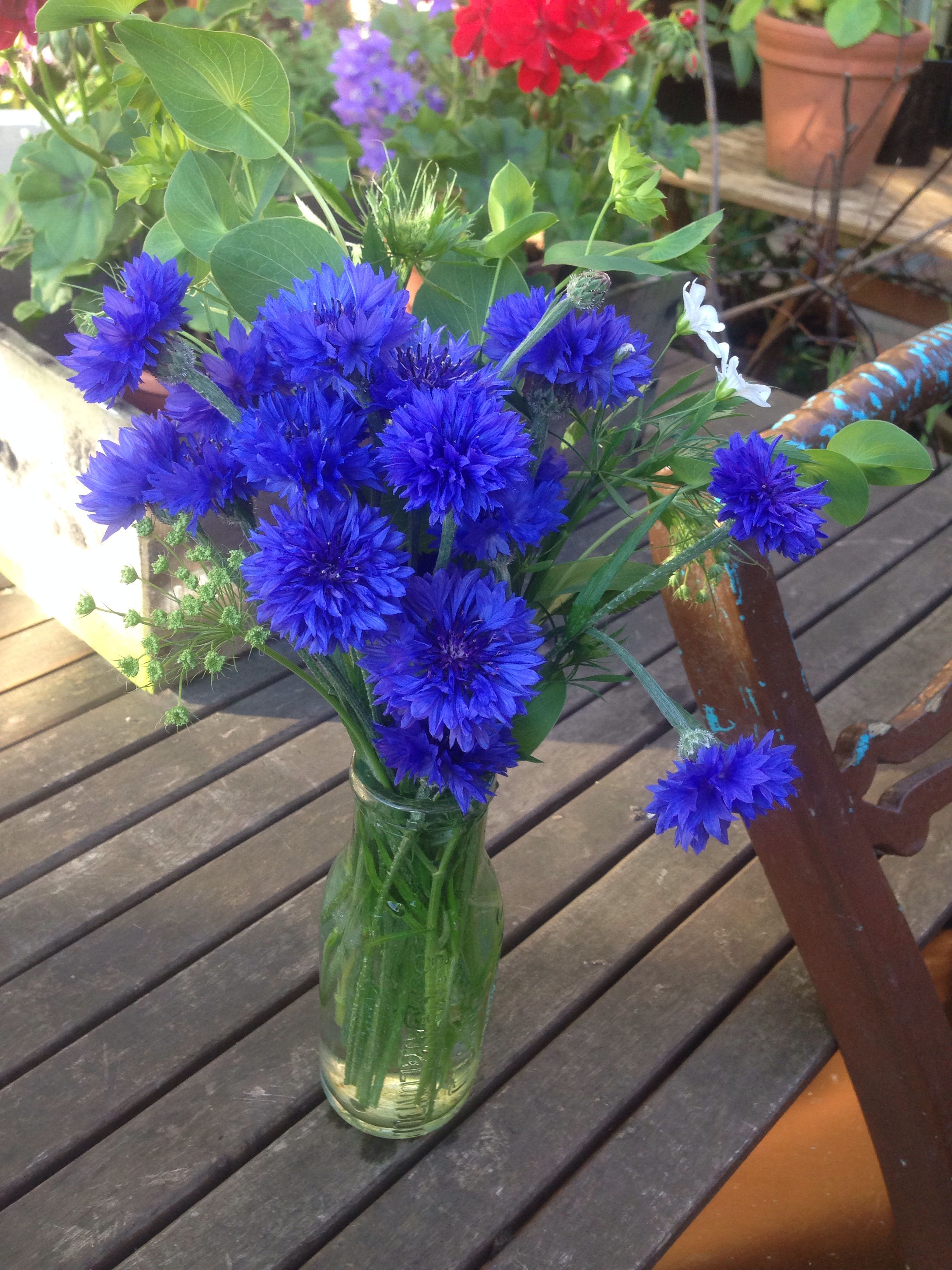 Cornflower 'blue ball', Ammi Majus & Bupleurum. Sown straight in the ground 2nd Nov 2013. Looking gorgeous in a vase, 12th June.