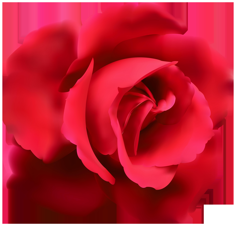Red Roses Vector, Kyrmyzy gul png resimler, png kyrmyzy