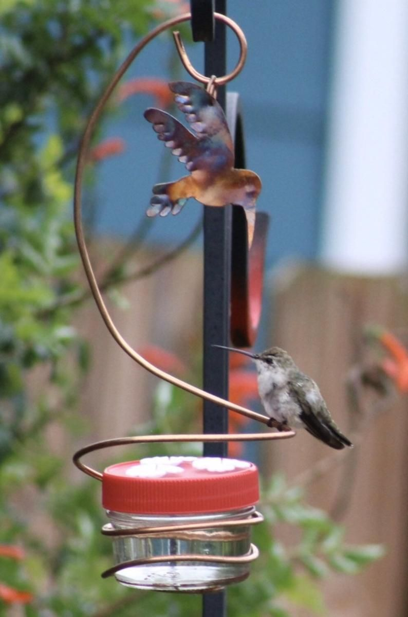 Hummingbird Feeder Copper and Glass Window Hanging Etsy