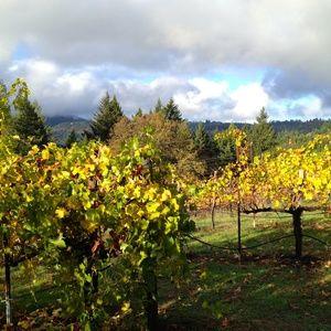 My favorite vineyard shots