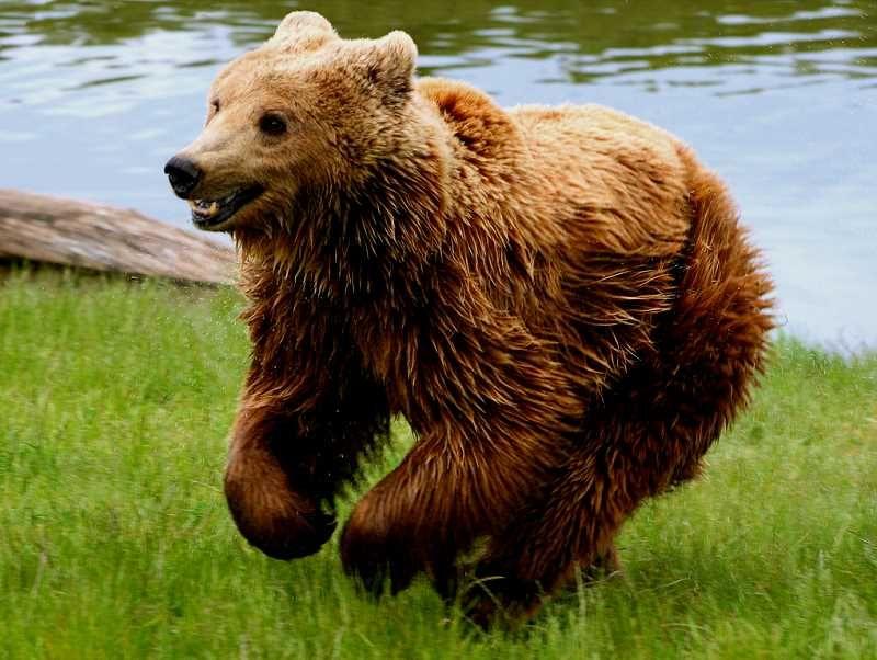 bear_lg.jpg (800×602)