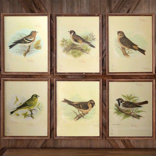 Framed Vintage Bird Prints, Set of 6   Bird prints, Prints and ...