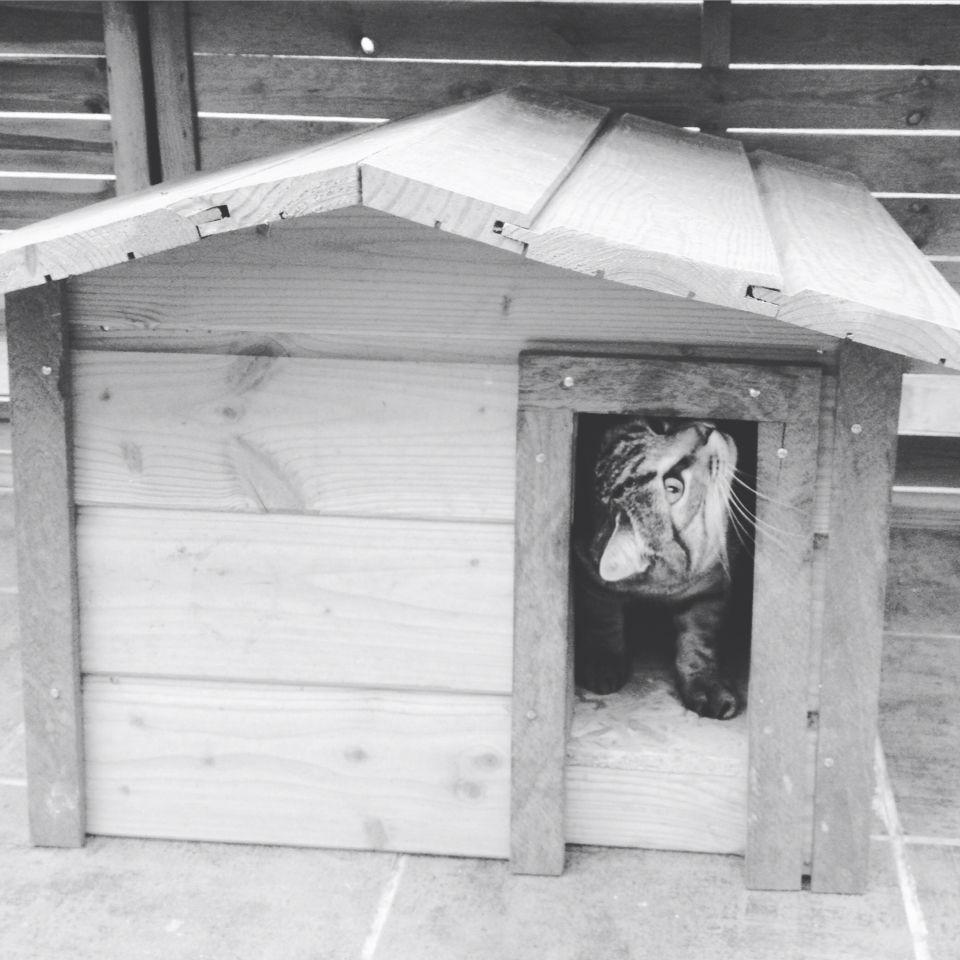 cabane ext rieur en bois pour chat chat ben oui j 39 ai un chat cabane chat niche chat