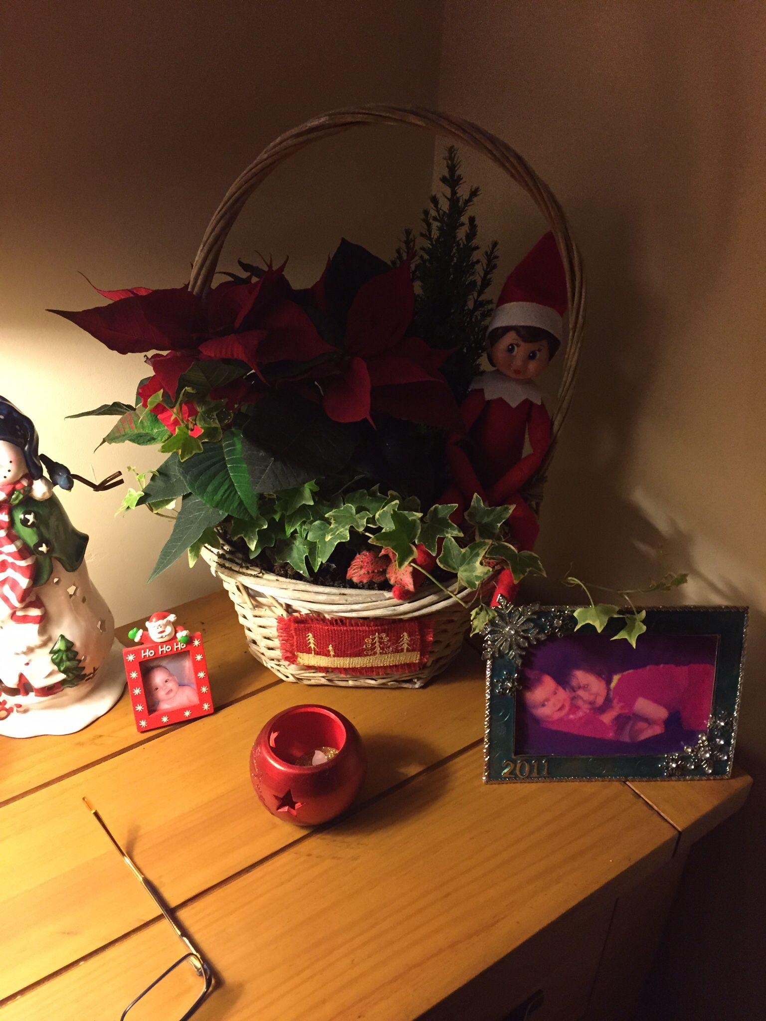 Pretty little flower Novelty lamp, Pretty little, Flowers
