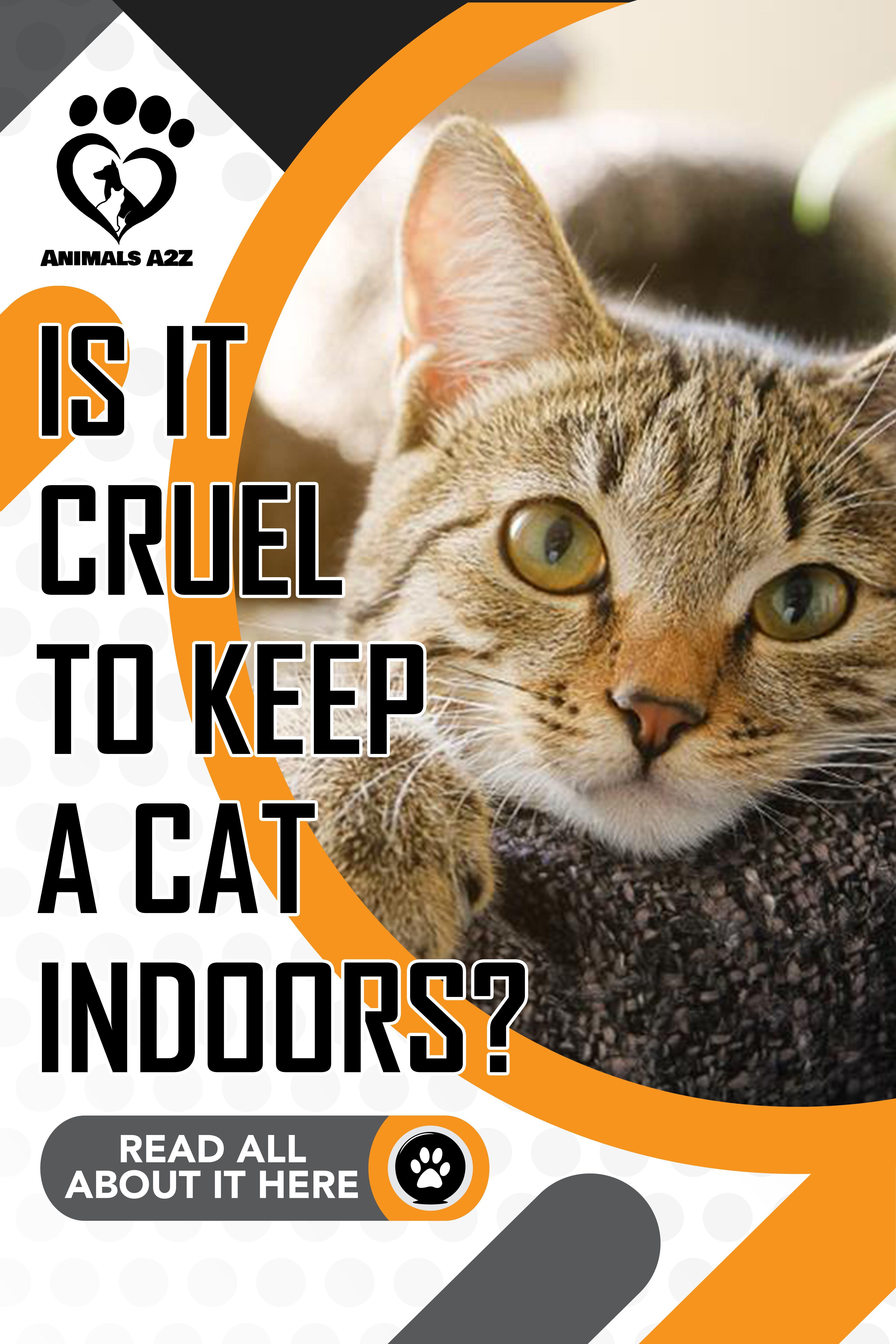Is It Cruel To Keep A Cat Indoors Cat Facts Cats Cat Facts Best Cat Breeds